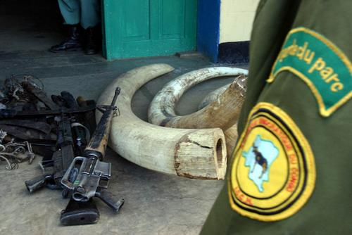 Virunga National Park conflict