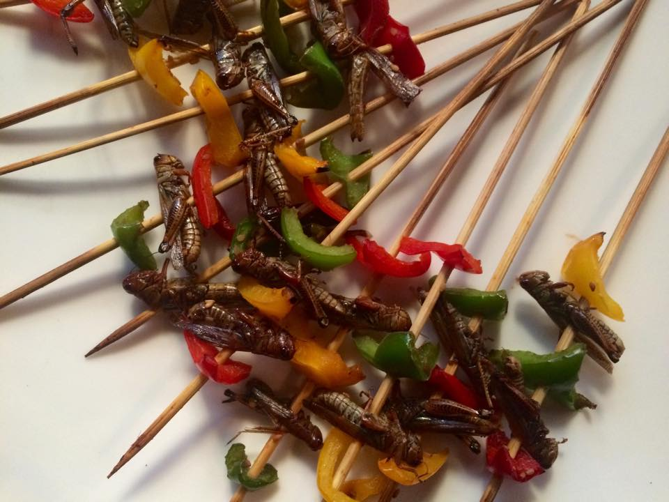 The New Culinary Frontier: Eating Insects