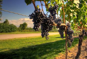 wine-tasting-guide-2