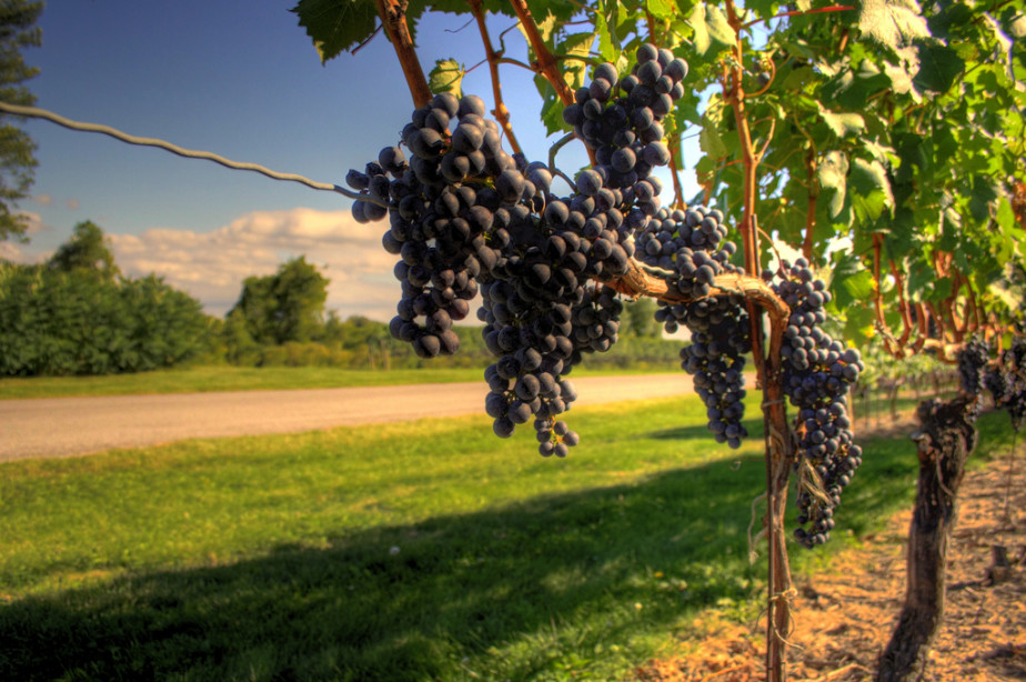 A Traveler's Guide to Wine Tasting