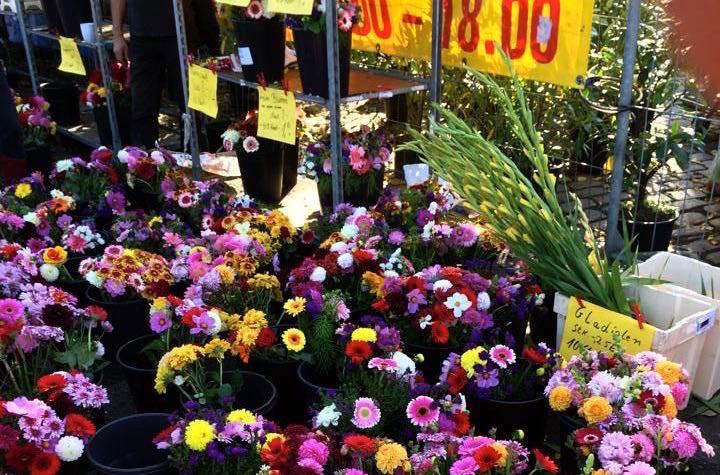 mauerpark-flowers