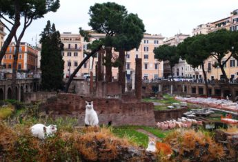 The Torre Argentina Cat Sanctuary & the Cats of the Roman Ruins