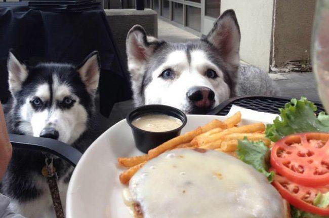 dog-friendly-restaurants-nyc