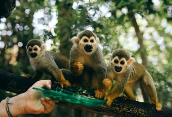 monkey-jungle-dominican-republic