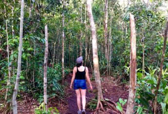 How I Got Lost in the Borneo Jungle