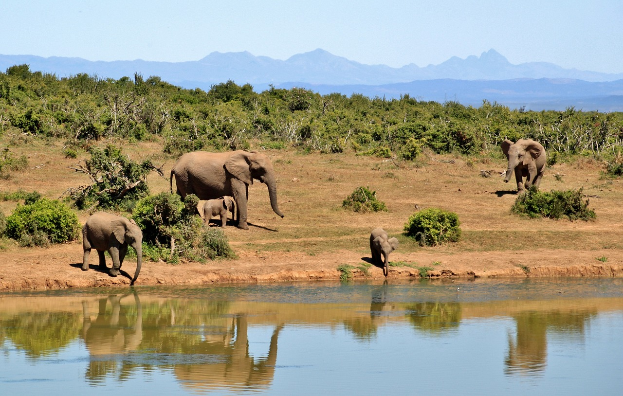 elephant-427138_1280