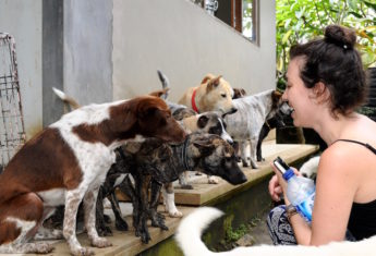 BAWA rescued dogs in Bali | © Nikki Vargas