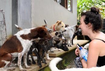BAWA rescued dogs in Bali | © Nikki Vargas
