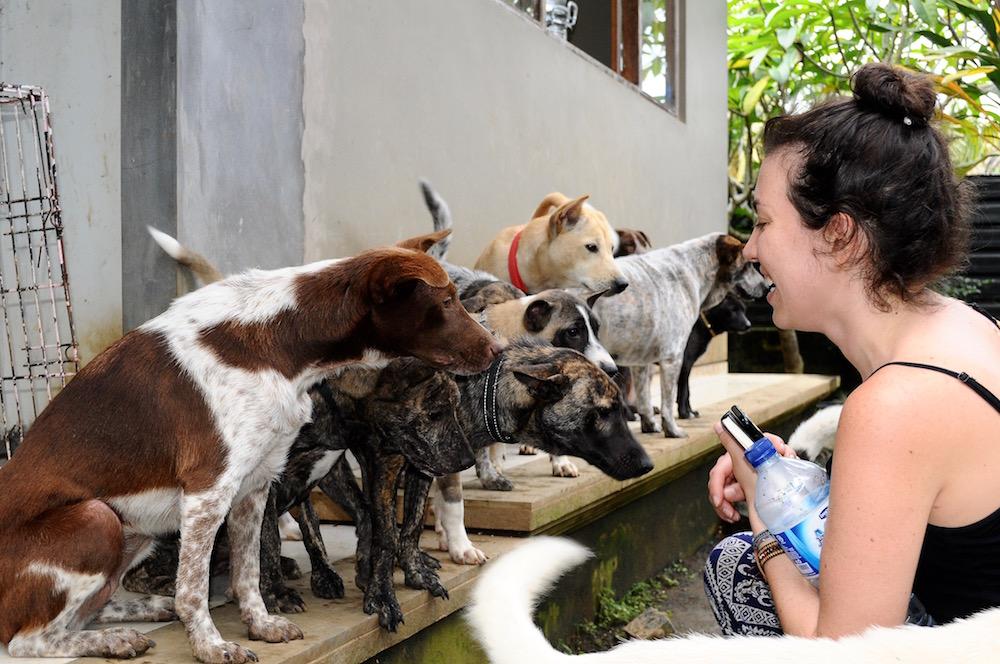 BAWA rescued dogs in Bali   © Nikki Vargas