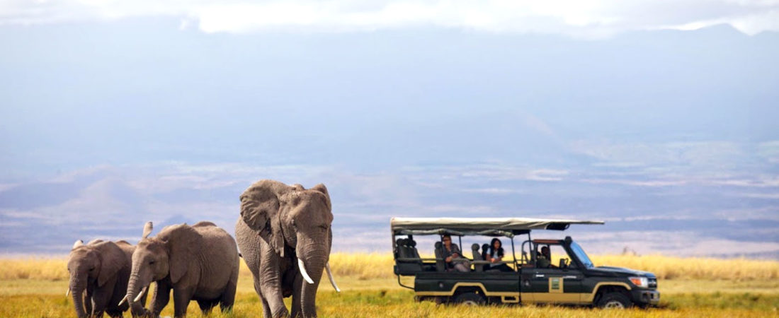 What to Consider When Choosing a Safari Destination